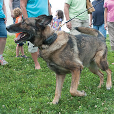 While mourning loss of K-9, Findlay looks to future